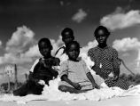 Children playing in cotton pile.