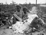 Children posing in cotton field.