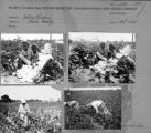 Contact sheet with images of women and children in cotton fields.