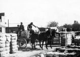 Horse-drawn wagon with cotton and workers.