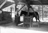 Man with horse in Jugtown Pottery facility.