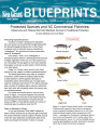 Protected species and NC commercial fisheries : observers and federal permits maintain access to...