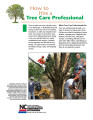 How to hire a tree care professional